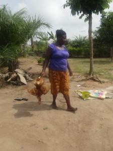FROMWORLD201501写真①クリスマスの日にこれからさばかれる鶏