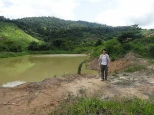 雨水を溜めた池で養殖中